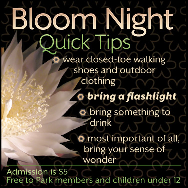 Bloom night tohono chul tucson az lea sobre bloom night en espaol aqu mightylinksfo