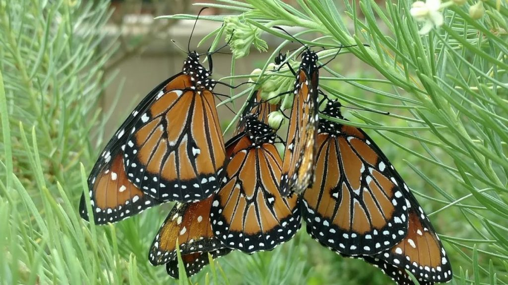 Create Butterfly Magic in Your Yard