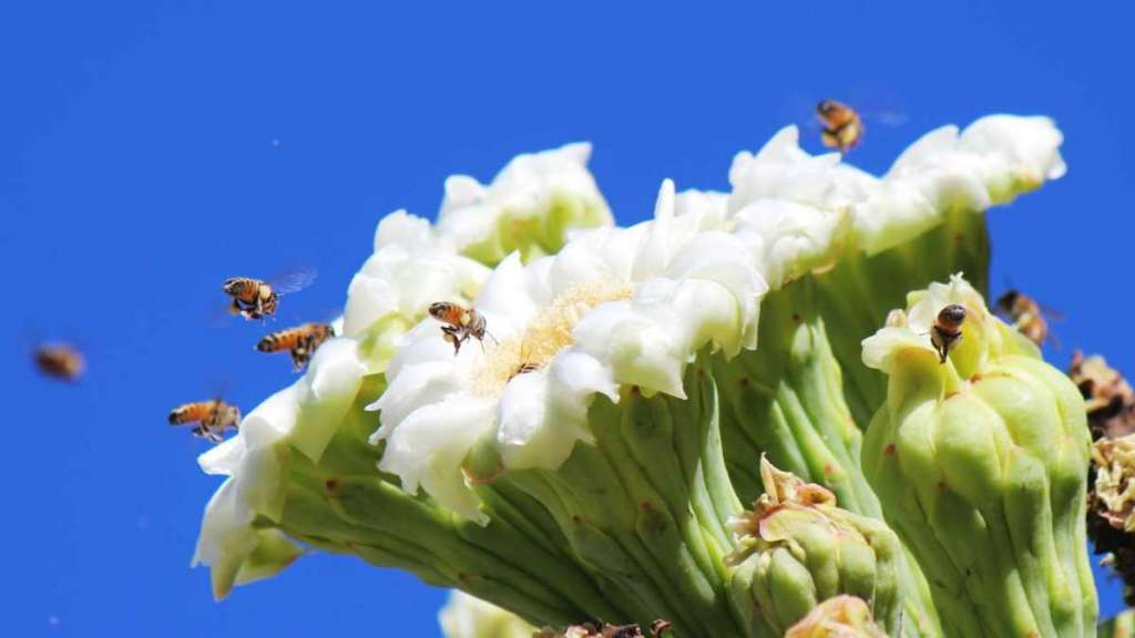 The Bees Are On the Move